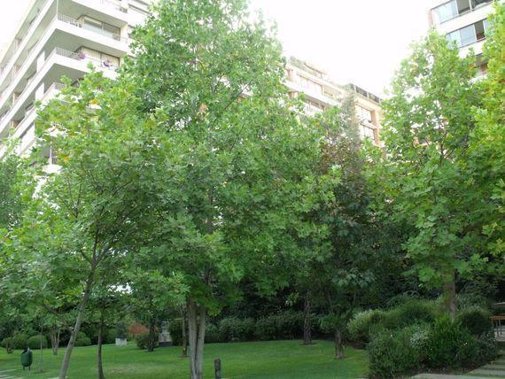 Estupendo Penthouse sector Cantagallo