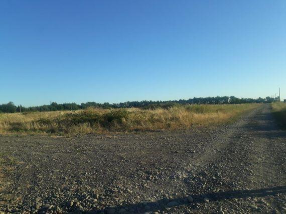 Se vende terreno 5000 metros camino a Coihueco