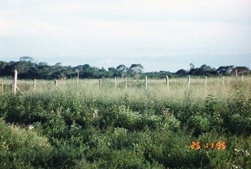 Terreno Carretera Escarcega Chetumal Km. 165, entre Campeche y Chetumal