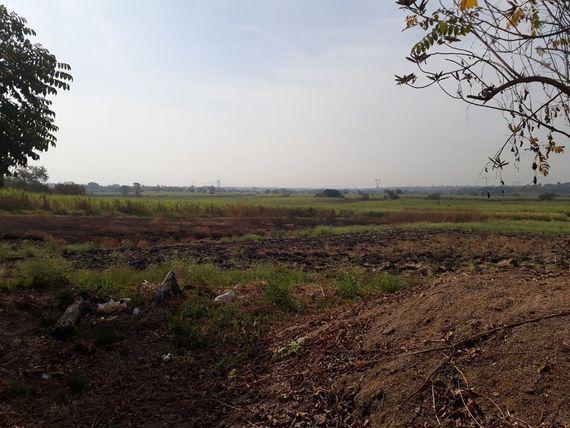 Campo, El LLano (2)