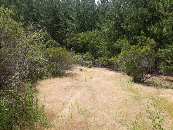 Se vende terreno con bosque y pequeña Viña en Parral