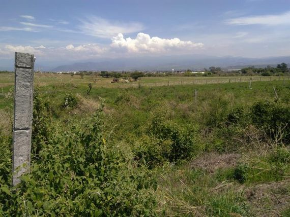 Terreno en Venta en COLONIA AMATES