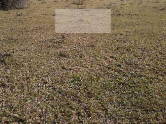 Chácara Com 23 Hectares em estrada Principal na Águas Claras