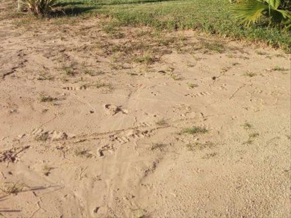 """Leia Com Atenção Chácara com 35,5 Hectares no Passo da Areia em <span itemprop=""""addressLocality"""">Viamão</span> ou Lotes de 3 Hectares"""