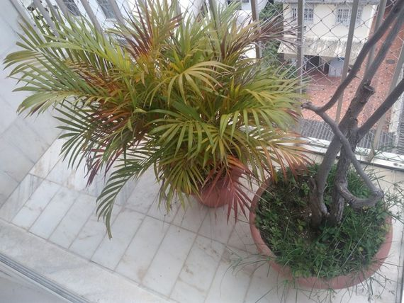 "(24672) Rua Campinas - <span itemprop=""addressLocality"">Grajaú</span>"