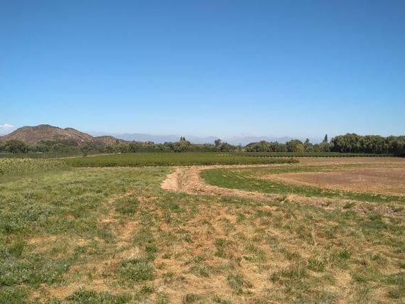 Atención inversionistas excelente campo con viñas