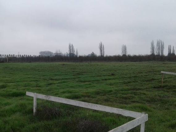 Terreno 5.000 mts2 ubicado a 7 minutos de Curico