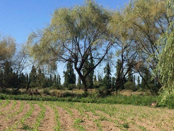 "Parcela de agrado y/o agrícola con casa  2,75 Há. <span itemprop=""addressLocality""><span itemprop=""streetAddress"">Linares</span></span>"