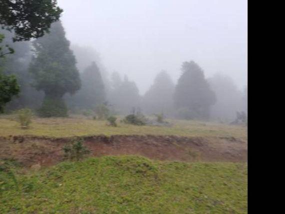 Se venden 81 hectáreas Cunco
