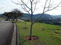 Terreno residencial à venda, Recanto Santa Barbara, Jambeiro - TE1141.