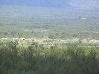 Terreno agrícola en venta en Coyame  La Esperanza