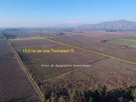 Oportunidad, Terreno agrícola sector Oliveto de Talagante