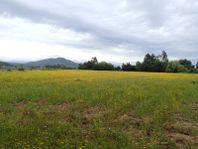 Parcela de 2 ha. En sector el Manzano, Pelarco