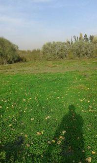 Vendo parcela de 3 hectareas, Longavi