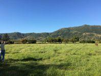 Campo en Lolol con riego, apto cerezos, paltos y cítricos.