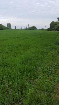 2 hectareas PAINE-LONGAVI con riego.